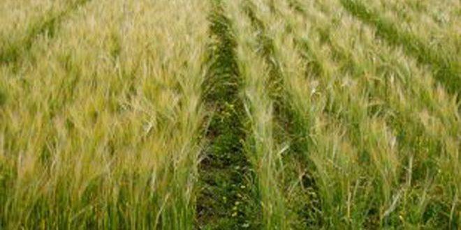 التوسع في الزراعة الأسرية وإنجاز برامج التحول إلى الري الحديث.. مجلس الوزراء يعتمد الخطة الزراعية للموسم القادم