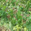الزراعة تعوّض 6238 مزارعاً متضرراً في 6 محافظات بـ 250,6 مليون ليرة