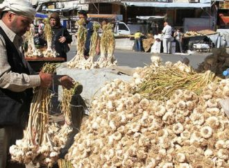 سورية أنتجت 38 ألف طن ثوم هذا العام.. وهذه أسباب ارتفاع سعره