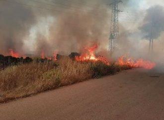 2480 حريقاً حراجياً وزراعياً في 4 محافظات في 2020.. والزراعة توضح أسبابها