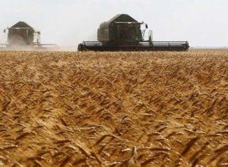 حصاد 89 ألف هكتار قمح في خمس محافظات حتى الآن.. وتسويق 11 طن