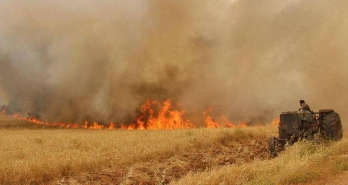 1570 حريقاً حراجياً وزراعياً حدثت في ستة أشهر.. والحراج تتخذ كافة التدابير وتنظم 657 ضبطاً