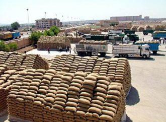 إكثار البذار تستلم 74,5 ألف طن من القمح الإكثاري في 8 مراكز.. وتنتج 490 طن من أمهات بذار البطاطا