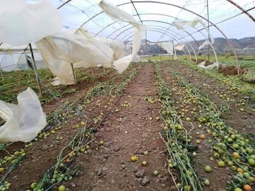 الزراعة تعوض 29,6 مليون ليرة على 154 مزارعاً متضرراً في محافظات اللاذقية والسويداء وحماة