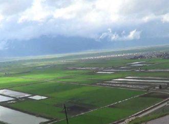 زراعة 40 ألف هكتار بمحصول القمح و4615 هكتار بمحاصيل أخرى من الخطة الشتوية بالغاب