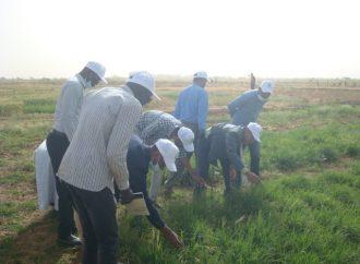 """""""أكساد"""" يدرب في موريتانيا على """"الأسس التطبيقية لتحسين محاصيل الحبوب بالبيئات الجافة وشبه الجافة"""""""