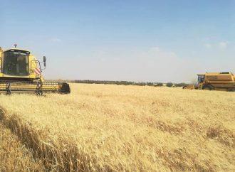 الزراعة: حصاد 67 ألف هكتار قمح و176 ألف هكتار شعير حتى الآن